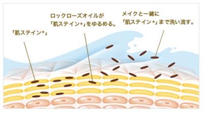 肌ステインのメカニズム