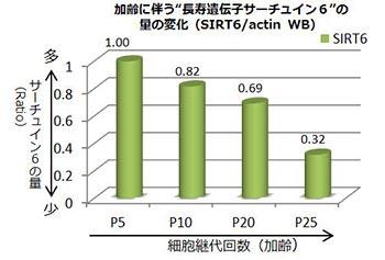 サーチュイン6のグラフ